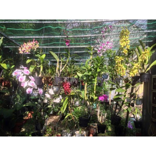 Lý do nên sử dụng máy phun sương tạo ẩm cho giàn trồng hoa lan mùa hè?