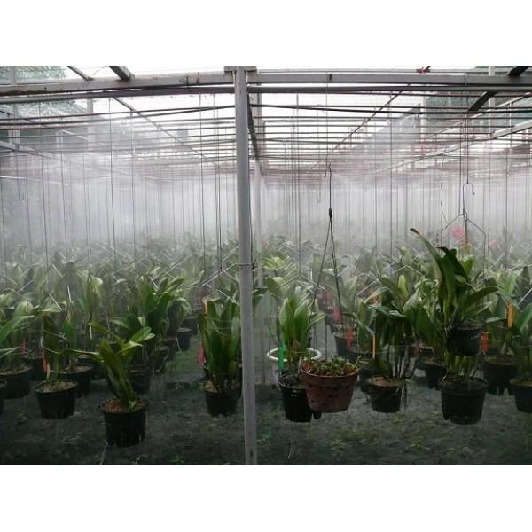 Vì sao cần sử dụng máy phun sương tạo ẩm cho giàn hoa lan vào mùa hè?