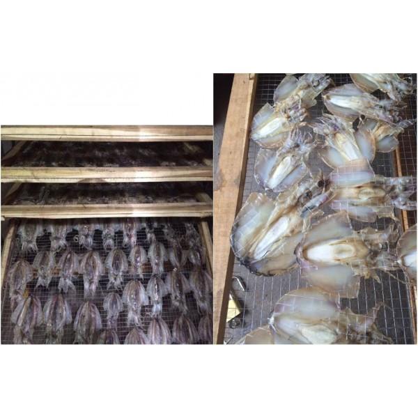 Hệ thống sấy khô hải sản 250 kg