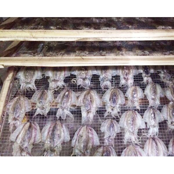 Máy sấy  hải sản Ikeno – Nâng cao chất lượng sản phẩm
