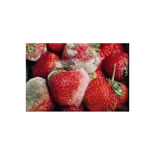 Tổng hợp cách ngăn ngừa nấm mốc cho kho chứa hàng nông sản